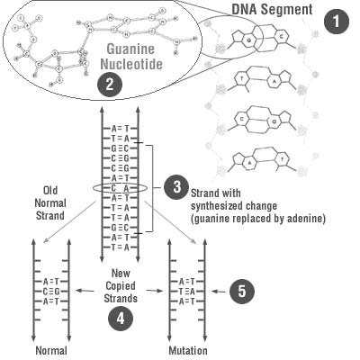 Site-based mutagenesis.